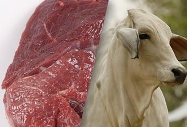 exportaciones de carne 2021, exportaciones carne primer trimestre 2021, exportaciones carne, exportaciones carne Colombia 2021, Exportación carne 2021, exportaciones carne marzo 2021, exportación de bovinos Colombia, exportación carne bovina, carne vacuna, economía internacional, comercio internacional, total exportaciones carne Colombia, ganaderos, ganaderos colombia, ganado, vacas, vacas Colombia, bovinos, Ganadería, ganadería colombia, noticias ganaderas, noticias ganaderas colombia, CONtexto ganadero, c