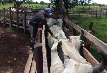 Colombia, sacrificio bovino, sacrificio formal de ganado, caída del sacrificio bovino en mayo de 2021, vacas, vacas Colombia, lechería, bovinos, ganadería bovina, ganadería bovina Colombia, noticias ganaderas, noticias ganaderas Colombia, contextoganadero