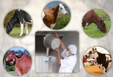 acopio leche Colombia