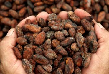 producción cacao Colombia