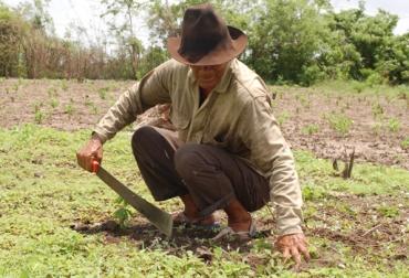 Producción agrícola Colombia