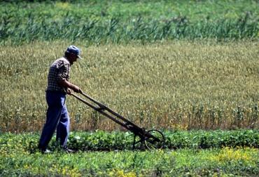 Producción en el campo, Colombia