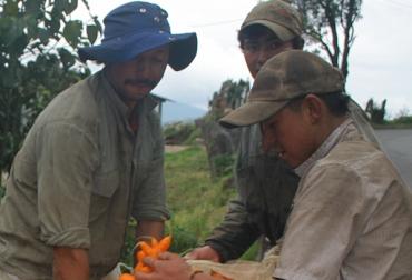 Encuesta de Opinión Empresarial Agropecuaria - SAC