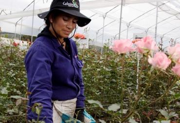 Producción de flores Colombia