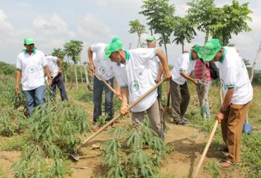 Producción de yuca Colombia
