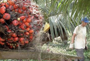 Refinanciación palmicultores