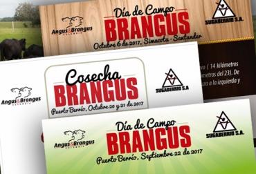 """La Asociación Angus & Brangus de Colombia organiza el primer juzgamiento de ejemplares de la raza Brangus de potrero y de lotes de terneros destetos comerciales, aplicando una metodología sin precedentes en el país.  Juan David Peláez, director ejecutivo de la asociación, expresó que se abrirá un espacio para que los ganaderos puedan exhibir sus ejemplares, al mismo tiempo que los interesados puedan adquirir bovinos de esta raza.   """"Vamos a hacer el primer juzgamiento de animales Brangus de potrero, que es"""