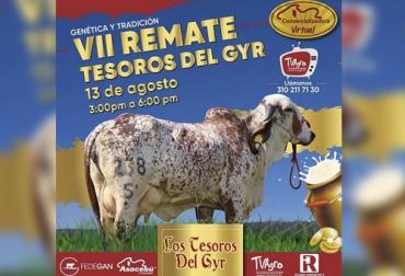 ganadería El Tesoro, Calidad y eficacia Ganadería El Tesoro, Remate los tesoros del Gyr, producción de embriones, vaca original, técnica de clonación, producción de leche, adaptación, fenotipo, remate, Gyr, Gyrolando, virtualidad, fedegan, Asocebú, ricardo barreneche, TvAgro, coronavirus, coronavirus Colombia, COVID-19, cuarentena, Ganadería, ganadería colombia, noticias ganaderas, noticias ganaderas colombia, CONtexto ganadero