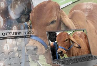 Eventos ganaderos octubre 2020, Eventos ganaderos 2020, remates de ganado 2020, Ferias Ganaderas, ferias ganaderas colombia, Eventos ganaderos febrero 2020, subastas, inicio 2020, octubre 2020, Venta de ganado, subastas ganaderas, bovinos, vacas, eventos bovinos Colombia, ganado bovino, ganadería bovina, Ganadería, ganadería colombia, noticias ganaderas, noticias ganaderas colombia, CONtexto ganadero, contextoganadero