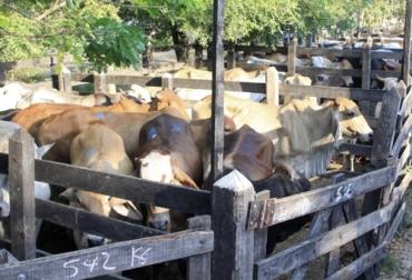Eventos ganaderos diciembre 2020, Eventos ganaderos 2020, remates de ganado 2020, Ferias Ganaderas, ferias ganaderas colombia, subastas, inicio 2020, octubre 2020, Venta de ganado, subastas ganaderas, bovinos, vacas, eventos bovinos Colombia, ganaderos, ganaderos colombia, ganado, bovinos, ganado bovino, Ganadería, ganadería colombia, noticias ganaderas, noticias ganaderas colombia, CONtexto ganadero, contextoganadero