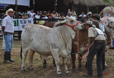 Feria ganadera en Sabanalarga