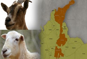 Sector ovino-caprino en Colombia