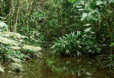agua sistemas silvopatoriles