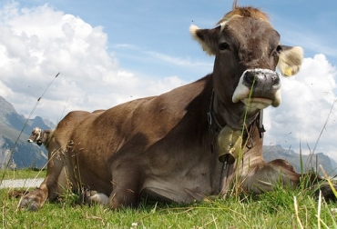 inapetencia en bovinos
