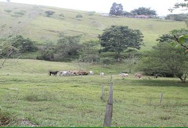 Bajar la carga animal en ganadería