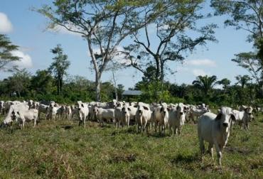 app para inventario bovino colombia