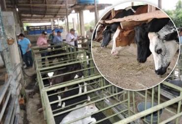lechería especializada en el trópico bajo Colombia