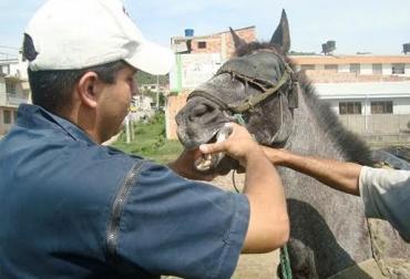 Desparasitar caballos