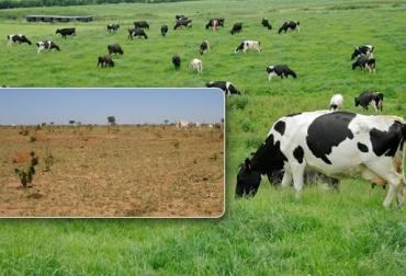 pastos para las vacas