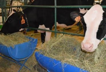 Bioseguridad bovina