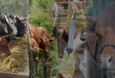 ecuación de la ganadería