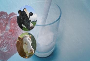 cruces de razas bovinas ganadería