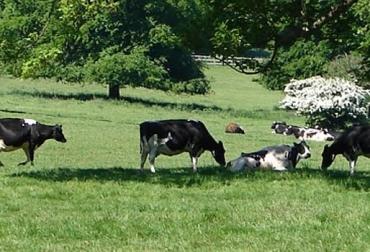 ganadería amigable con el medio ambiente