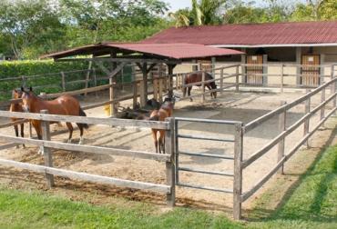 Instalaciones equinos