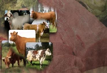 calidad de carne, razar cárnicas, Colombia, asociaciones, ganado,