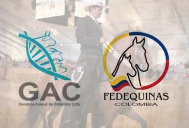 Convenio Fedequinas - Genética Animal de Colombia LTDA