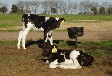 higiene en ganadería leche