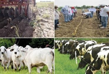 retos de ganaderos colombia