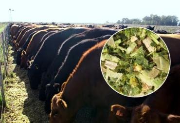 silo para bovinos