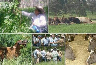 finca, modelo de producción, sistemas, productividad, ganado, ganaderos, Colombia