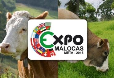 Asosimmental Expomalocas 2016