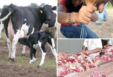 equilibrio entre la fertilidad y productividad bovina, importancia de la  fertilidad y productividad bovina, índices reproductivos en bovinos,