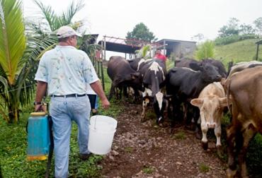 Image result for ganaderos chile