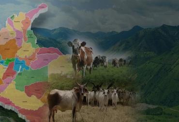 Tipo de raza de acuerdo al piso térmico en Colombia, piso cálido, piso templado, piso frío, PÁRAMO, brahman, Guzerá, Gyr, jersey, holstein, normando, Ayrshire, bon, hartón del valle, Romosinuano, producción de carne, producción de leche, rusticidad y adaptabilidad de las razas bovinas, CONtexto ganadero, ganaderos colombia