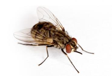 estrategias de control de plagas, control de moscas, control integral, control biológico, ganaderos, sector ganadero, CONtexto ganadero.