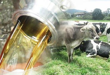 Recomendaciones para suministrar glicerol al ganado lechero, glicerol ganadería Colombia, propiedades de pastos en trópico alto, pastos en clima frío, pastos con alto nivel de proteína y baja energía, glicerol suplemento bovino, CONtexto ganadero, ganaderos Colombia