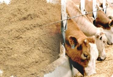 Harina de pescado, fuente proteica, alimento para el ganado, alimento vacuno, suplementación animal, CONtexto ganadero