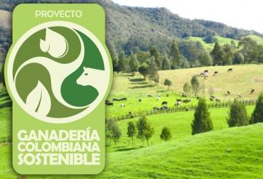 avances del programa Ganadería Colombiana Sostenible, ganaderos beneficiados, sistemas silvopastoriles, GEF, cercas vivas, CONtexto ganadero