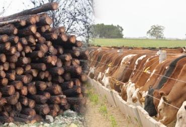 Taninos dieta bovinos, taninos dieta bovinos Colombia, suministrar taninos dieta bovinos, suministrar taninos en bovinos, cómo suministrar taninos, Administración de taninos de bovinos, taninos plantas, taninos para bovinos, taninos para rumiantes, taninos, CONtexto ganadero, ganaderos colombia