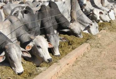 subproductos agroindustriales, alimentación del ganado, alimentación estratégica bovina, manejo animal, harina de arroz, germen maíz, palmiste, bagazo de caña, granos de destilería, CONtexto ganadero