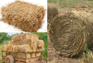 fabricación de heno, heno para ganado, formas de empacar heno, heno para épocas críticas, alimentación bovina, CONtexto ganadero