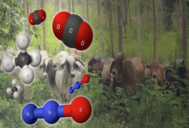 Ganadería emisión GEI, emisión gases efecto invernadero, Ganadería Sostenible, ganadería sostenible Colombia, huella de carbono, gases de efecto invernadero, gases contaminantes de la ganadería, beneficios de los sistemas silvopastoriles, beneficios de la ganadería, efectos positivos en el medio ambiente, CONtexto ganadero, ganaderos Colombia