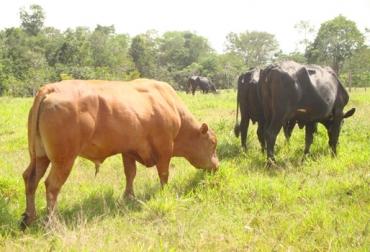 vigor híbrido, cruces en bovinos, cruzamientos bovinos, crías superiores a sus padres, mejoramiento genético, CONtexto ganadero