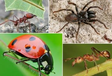 control de plagas, control biológico de plagas, biocenosis, repelentes naturales en ganadería, insecticidas naturales, ganadería ecológica, ganadería sostenible, contexto ganadero, ganadería colombia