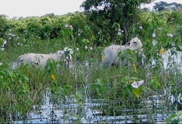 sabanas inundables, ganadería en sabanas inundables, ecosistemas sensibles, espejos de agua, terrenos pantanosos, manejo animal, CONtexto ganadero