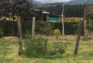 árboles dispersos en potrero, Sistemas silvopastoriles, Ganadería Sostenible, ganadería amigable con el ambiente, sombra en los potreros, CONtexto ganadero